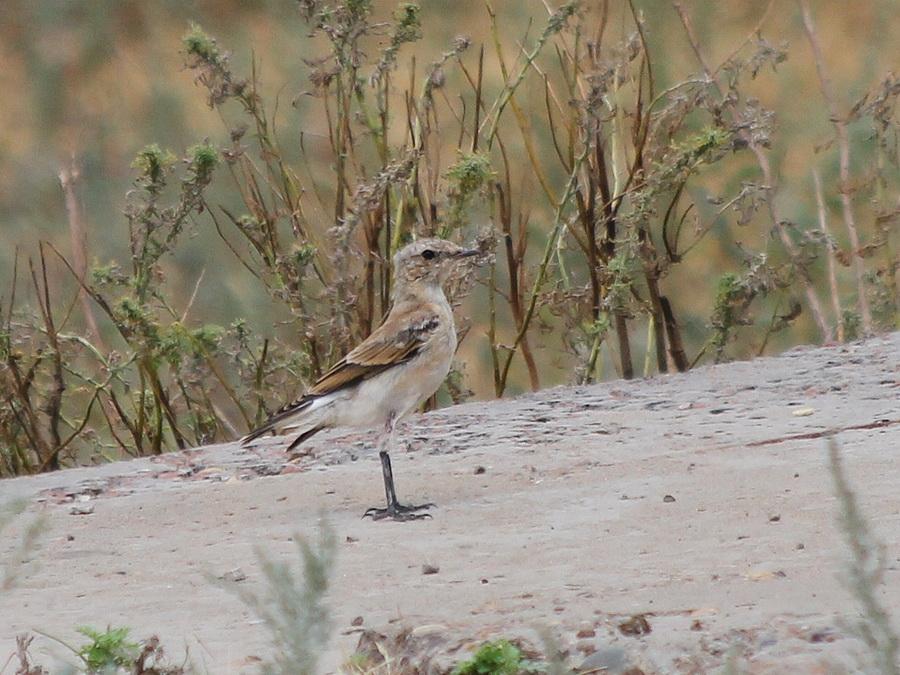 интерес фото птиц саратовской области важно понимать