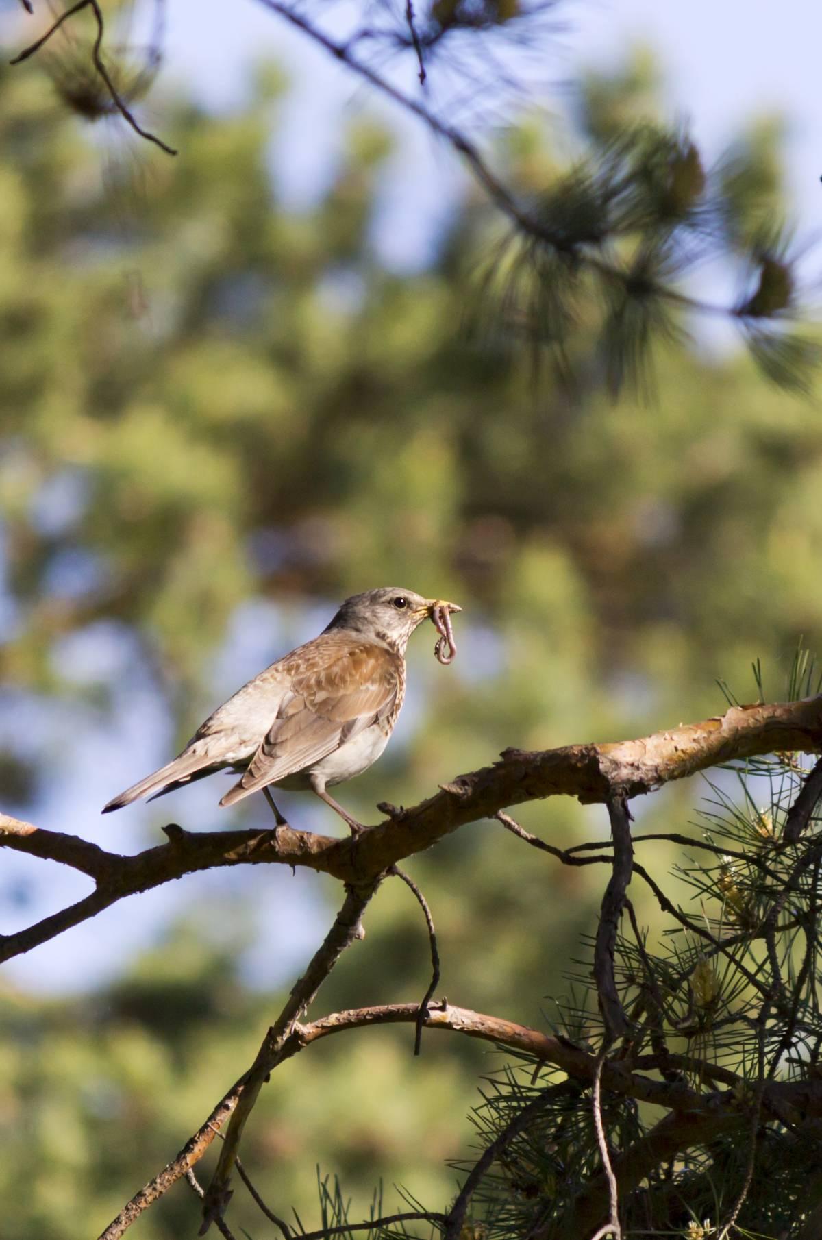 птицы свердловской области картинки хочу загонять себя