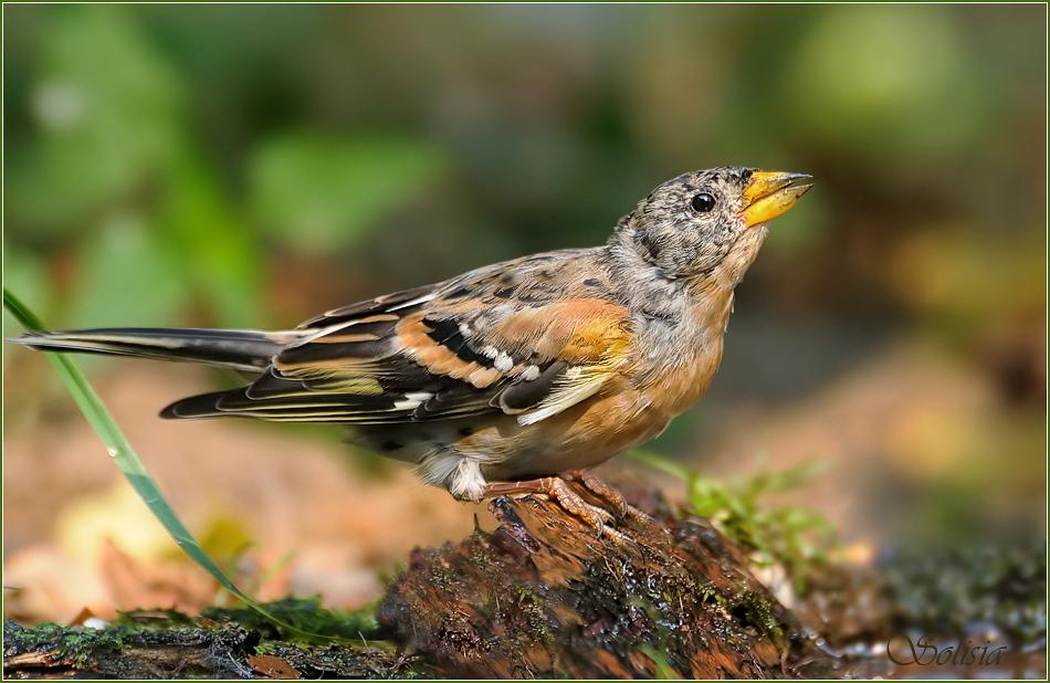 картинки юрка птицы удачном