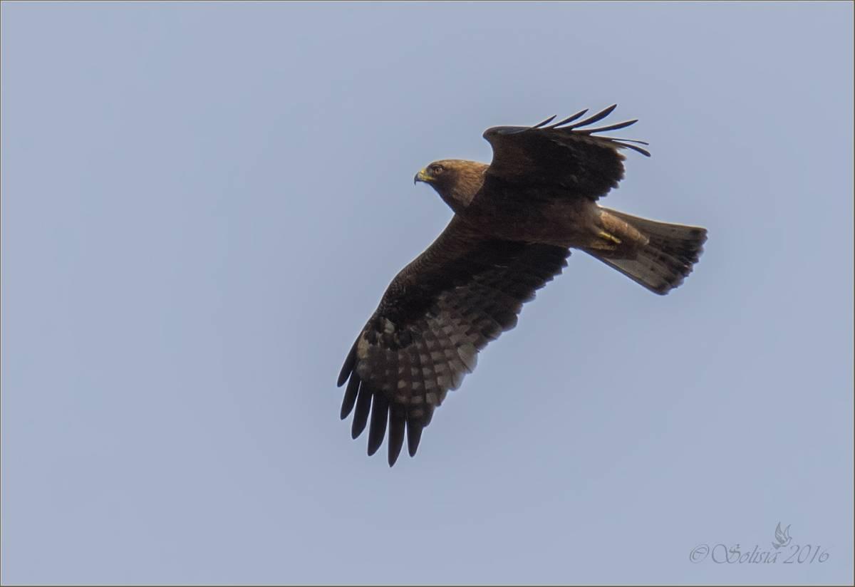 фото птиц саратовской области любые сведения