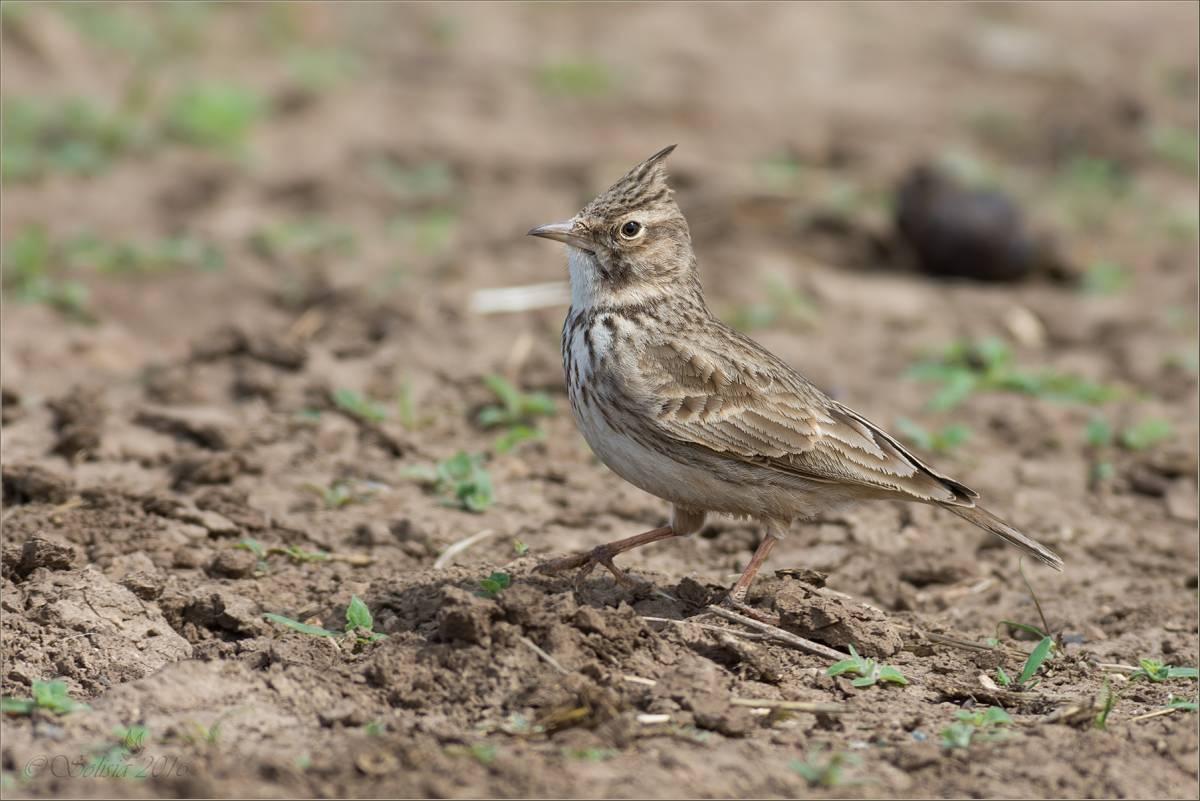 Птицы саратовской области фото