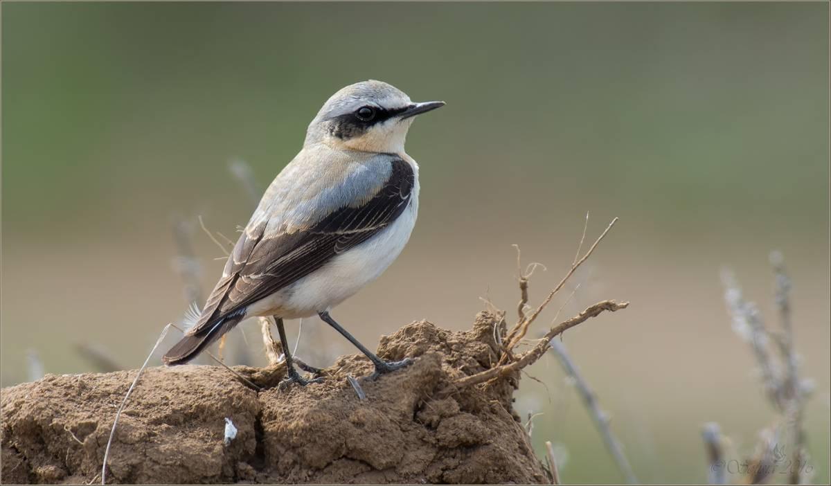 фото птиц саратовской области очень
