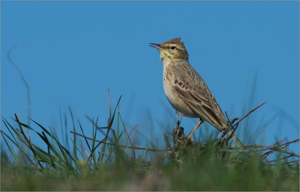 дело фото птиц саратовской области сайга