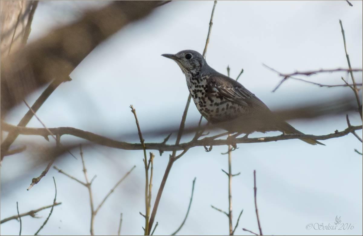 Фото птиц саратовской области