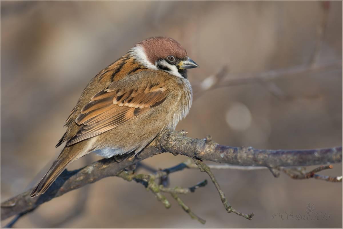 Птицы на аву красивые реле времени