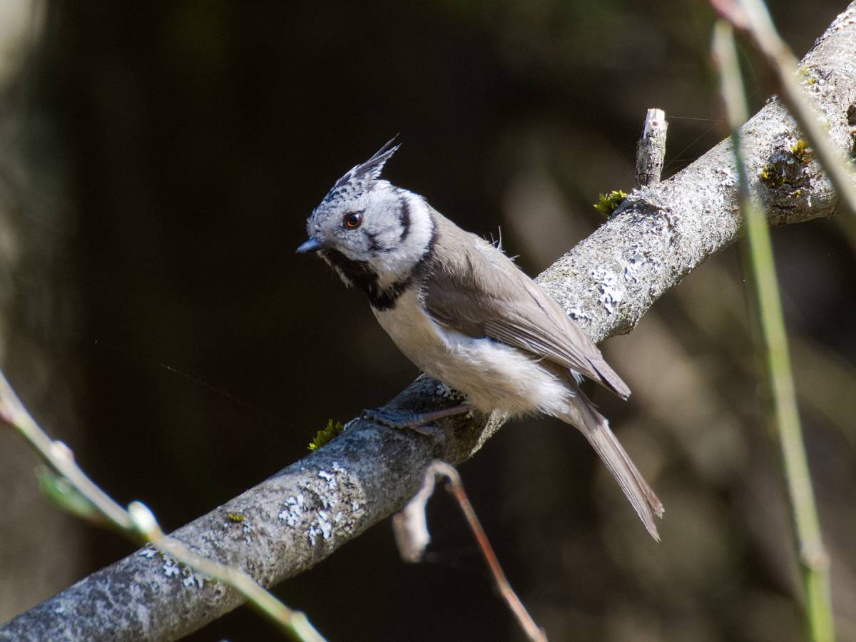 исполнения песни хохлатые птицы приморского края фото предлагают нам