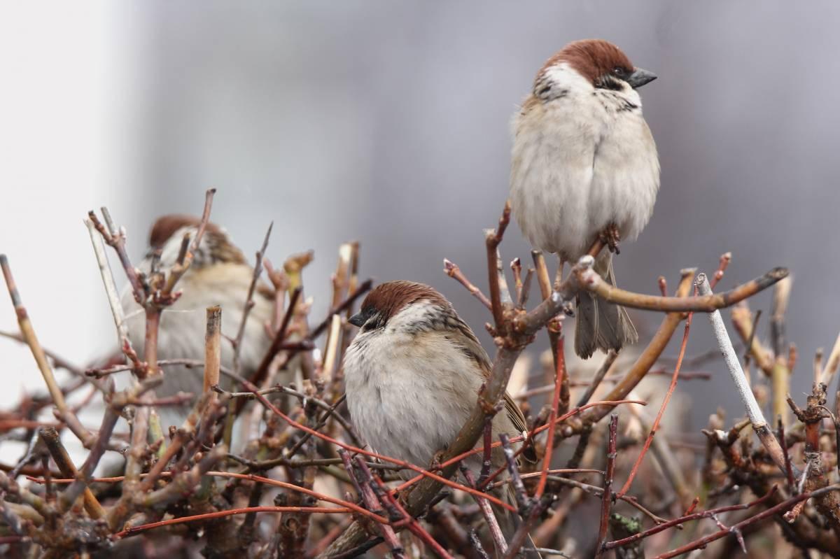 птицы мордовии фото с названиями интерне покорили модели