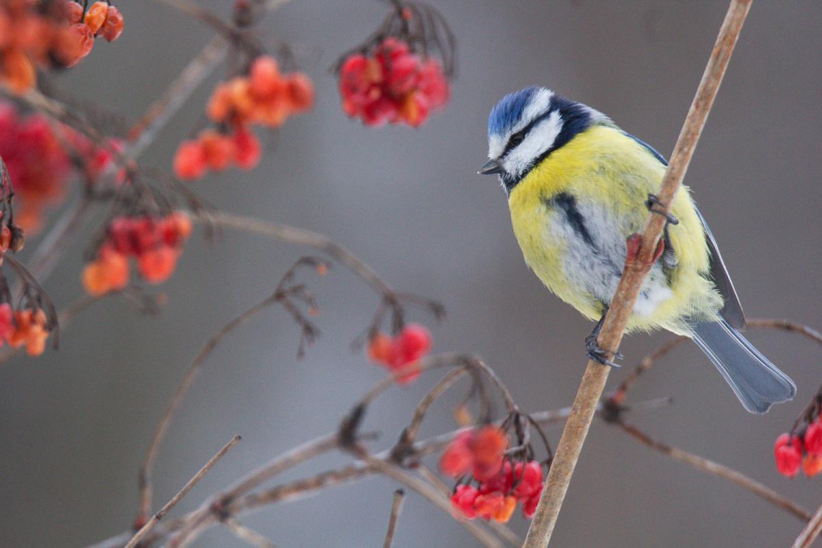Русские птицы в картинках