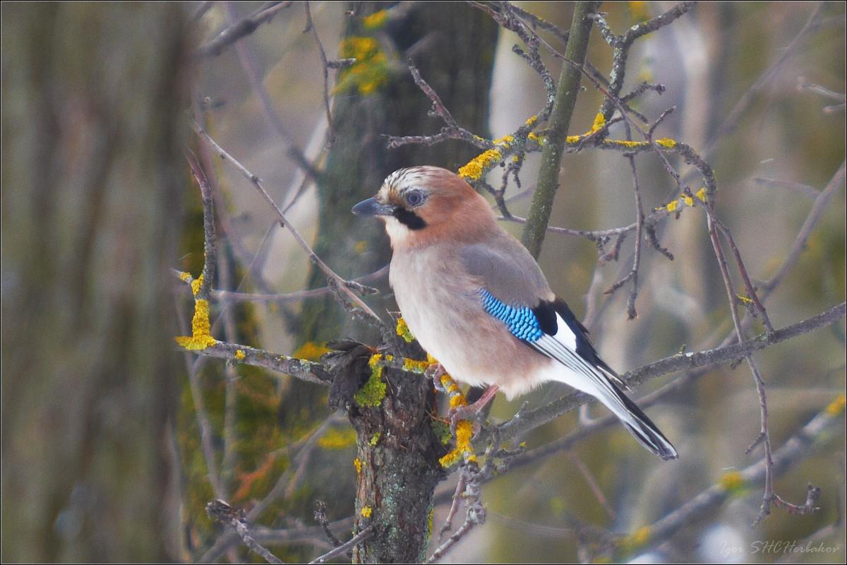 настоящее лесные птицы в г омск смотреть фотографии вторую