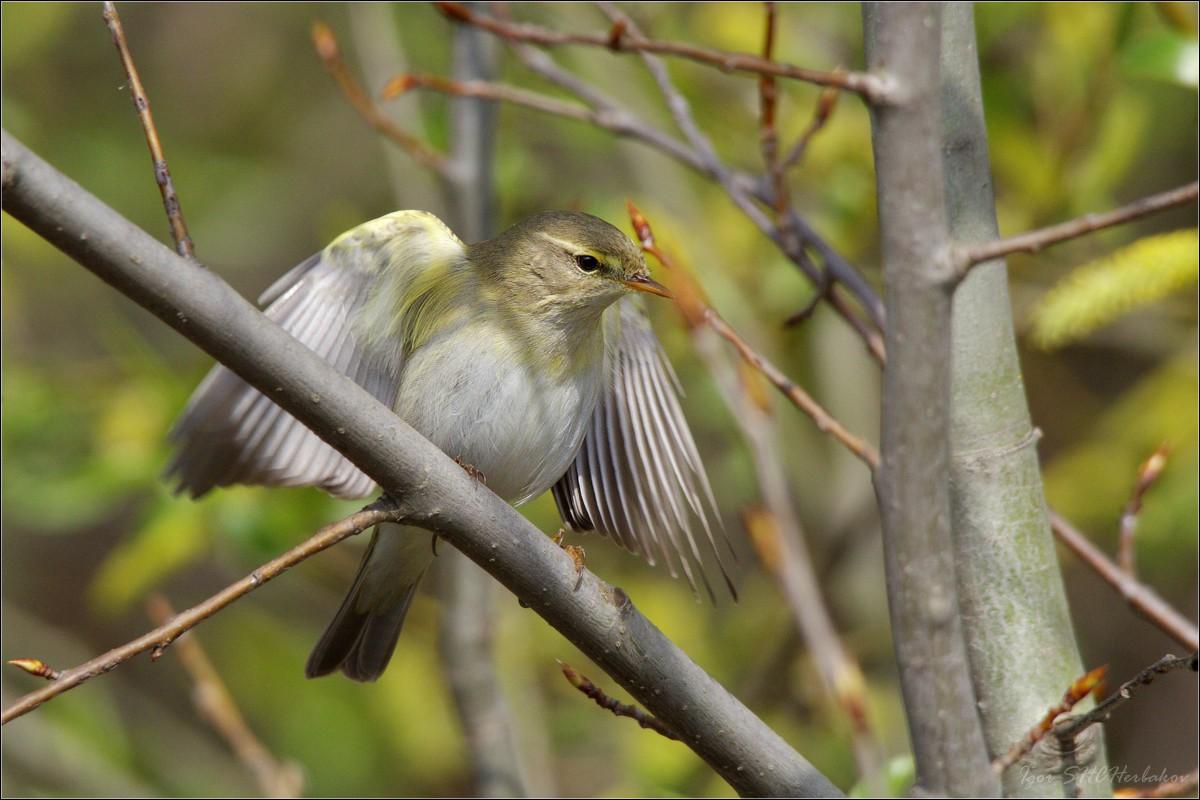 птицы летом картинки с названиями красивые