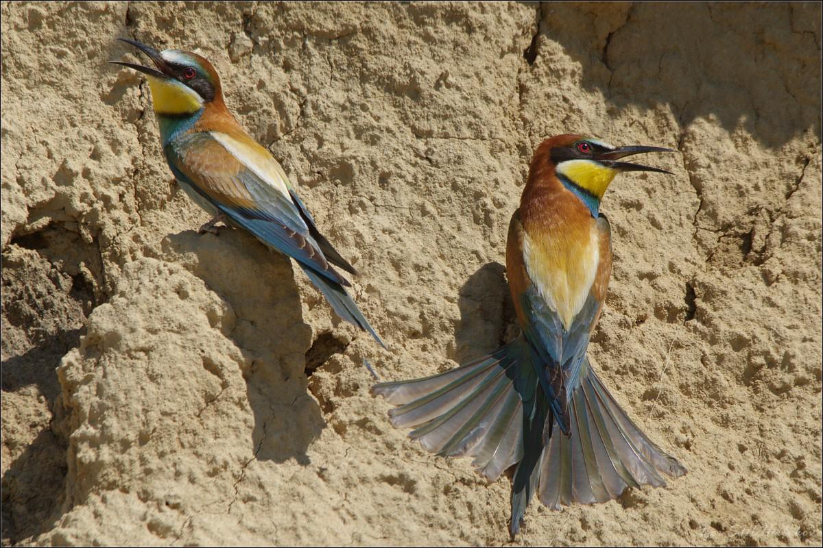 Птицы в оренбургской области фото и названия