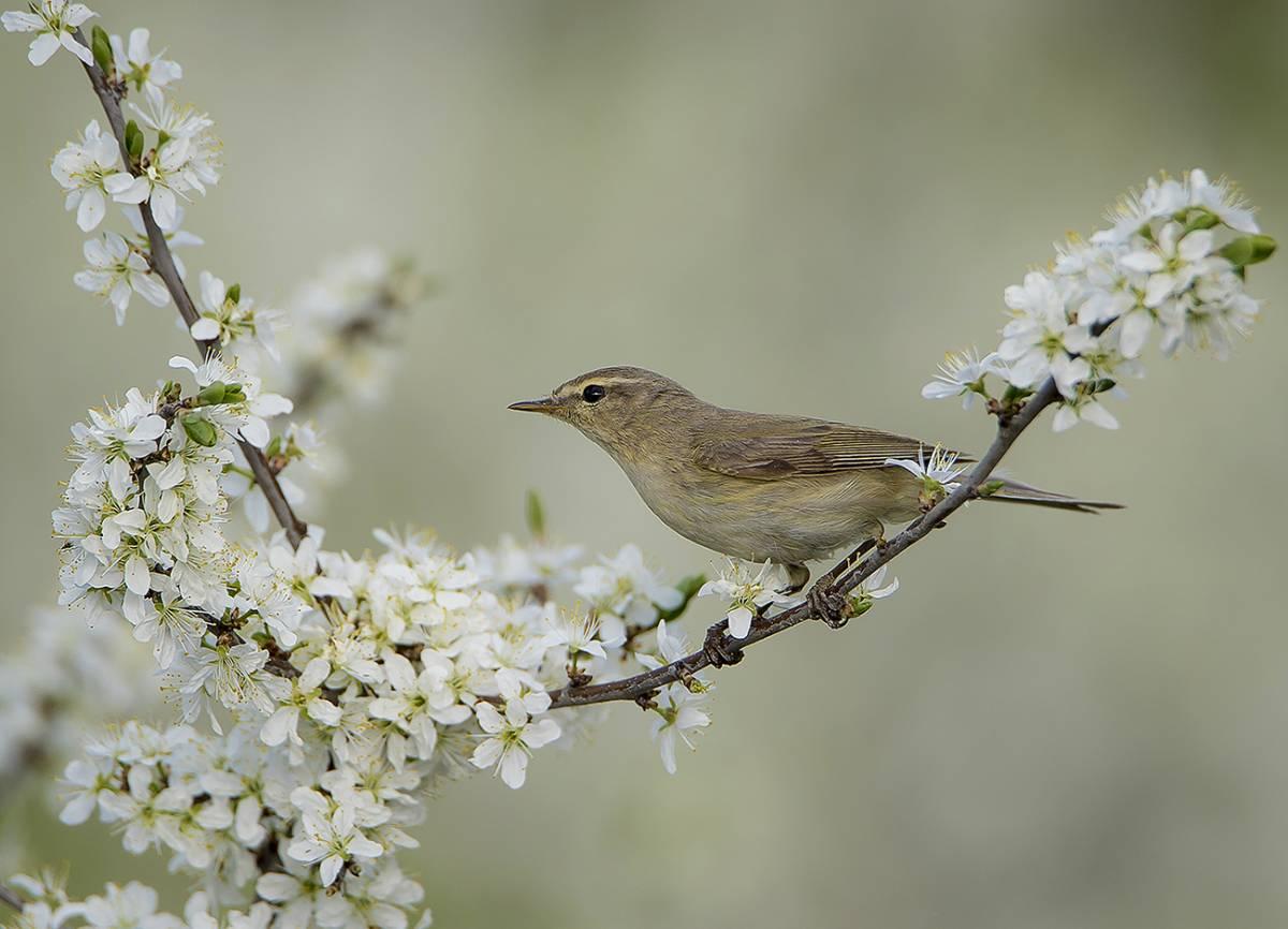 каждому вас картинки весенний лес с птицами любимый наш