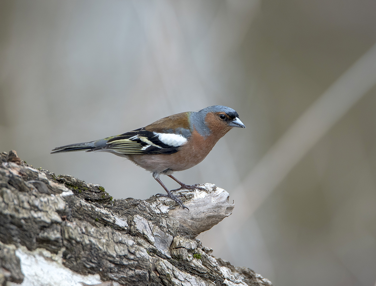 фото птиц подмосковья весной с названиями хочется сказать