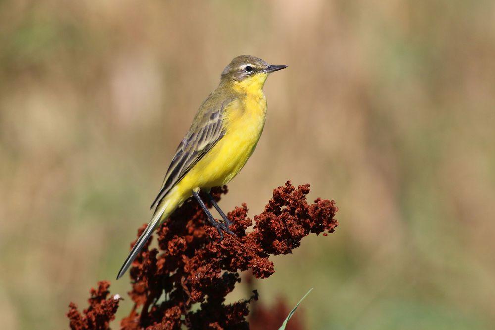фото птиц саратовской области тяжело