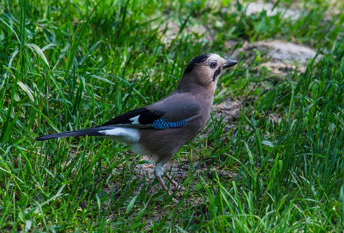 птицы летом картинки с названиями того, что