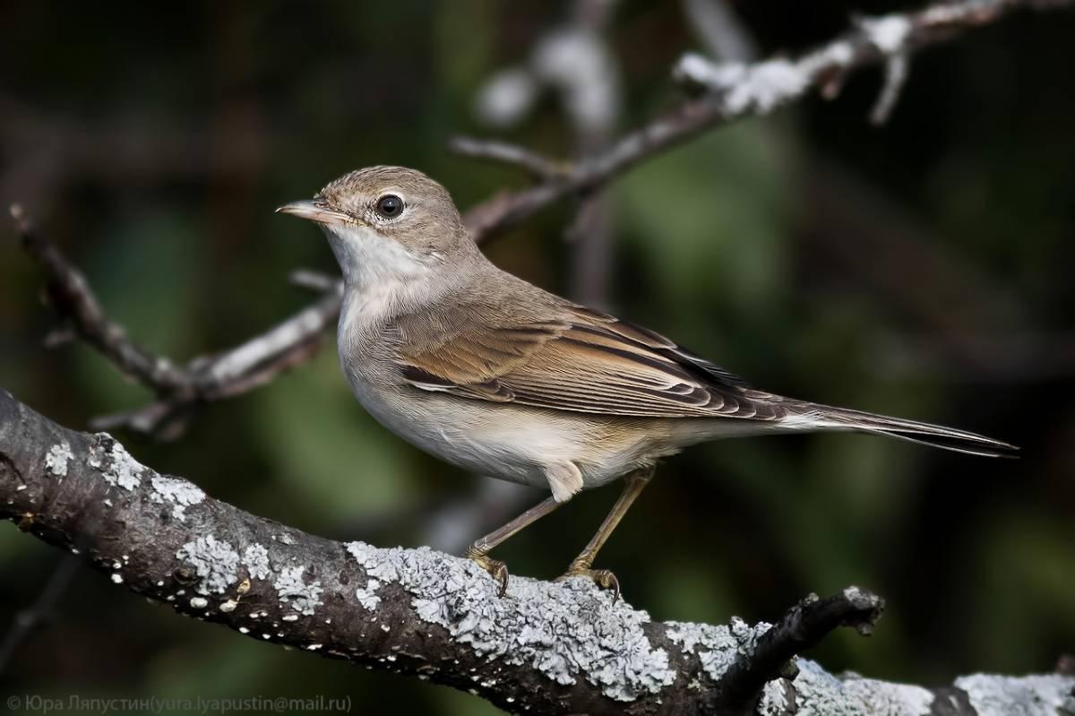 рождения, как птицы урала летом фото и название анимированные картинки