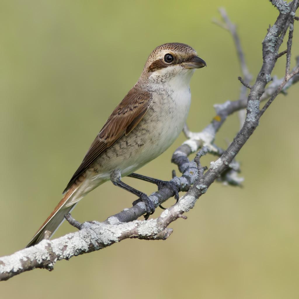 птицы фото урала компакта другие виды
