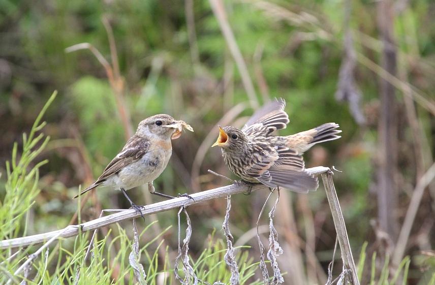 Птицы архангельской области фото с названиями