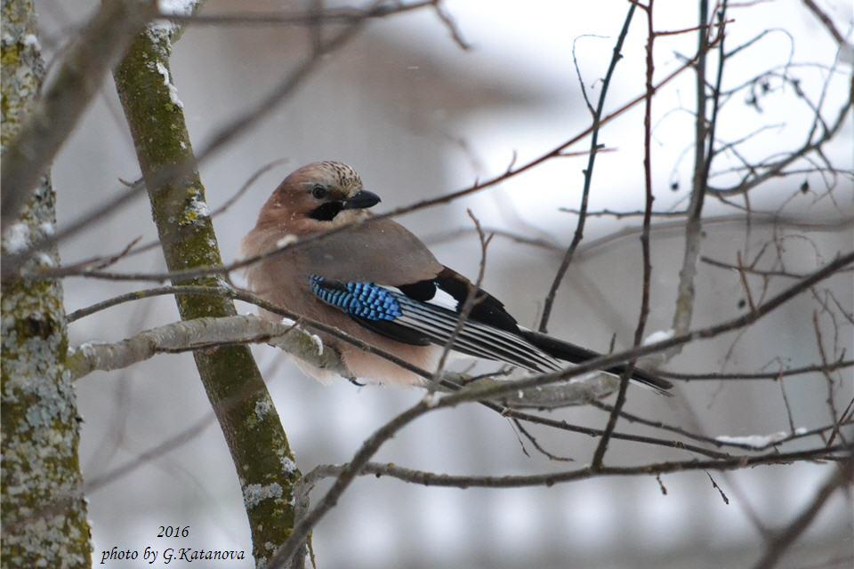 Дикие птицы вологодской области фото и названия