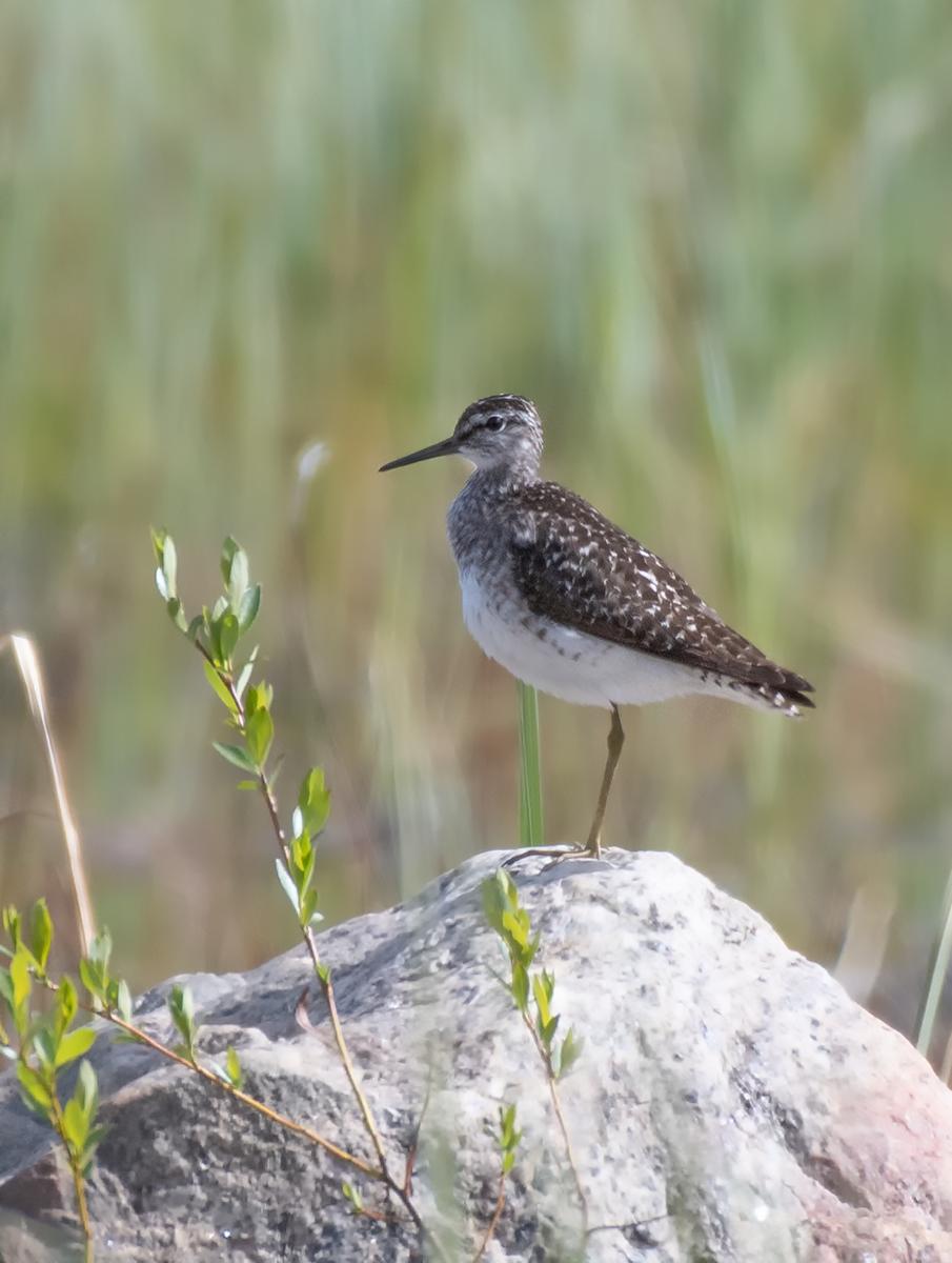 птицы кольского полуострова начале года