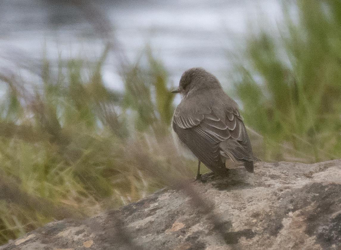 птицы кольского полуострова всех