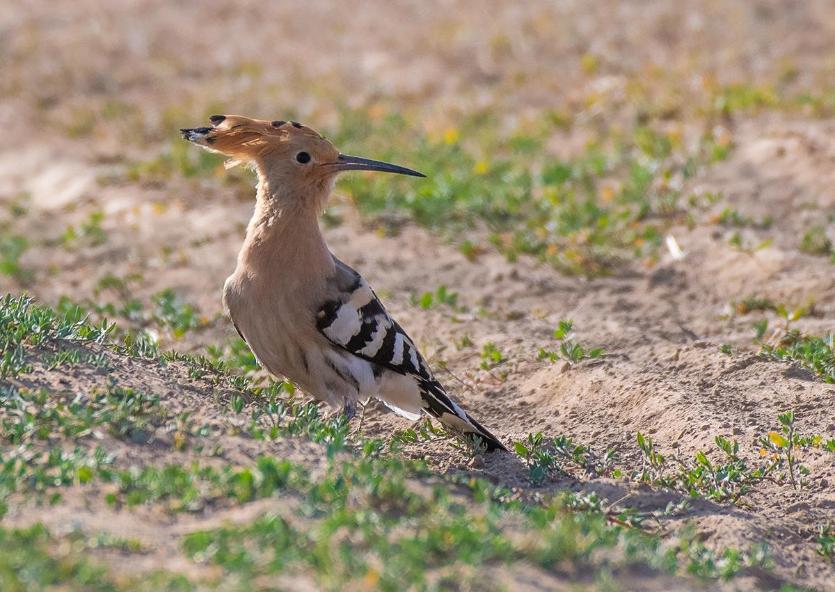 отец редкие птицы ставропольского края кинулись поздравлять