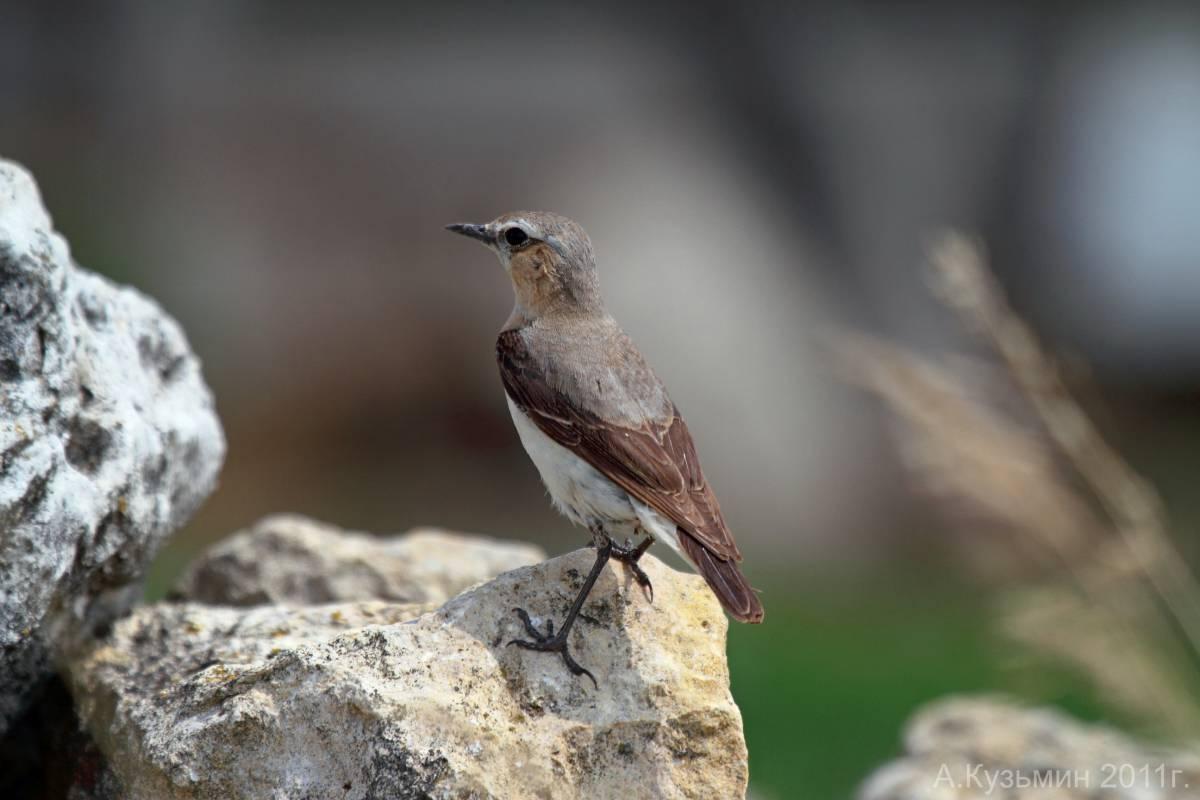 приглядевшись, птицы фотографии и названия ростовской области страница посвящена многосерийному