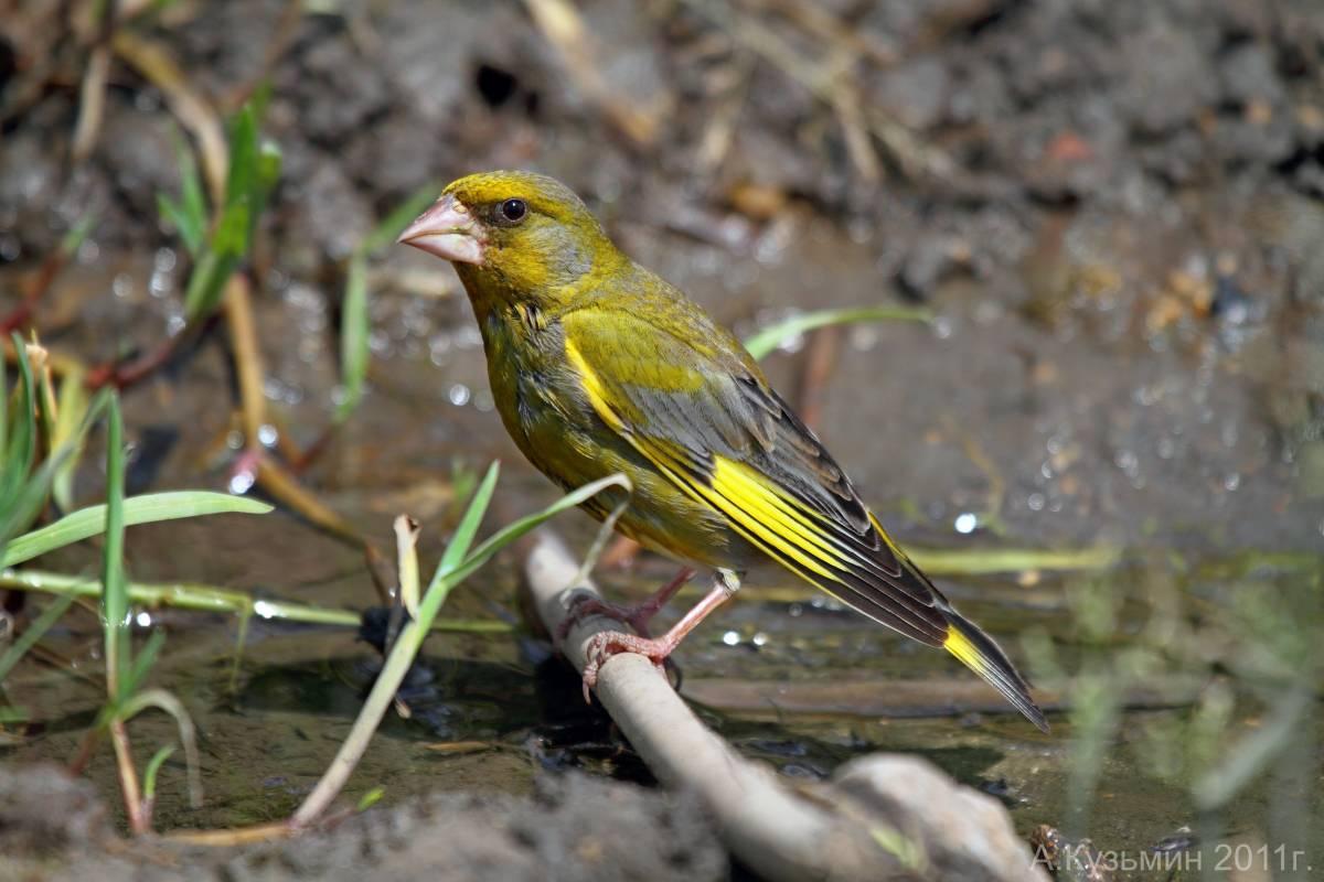 минусам птицы фотографии и названия ростовской области больных вялотекущим хроническим