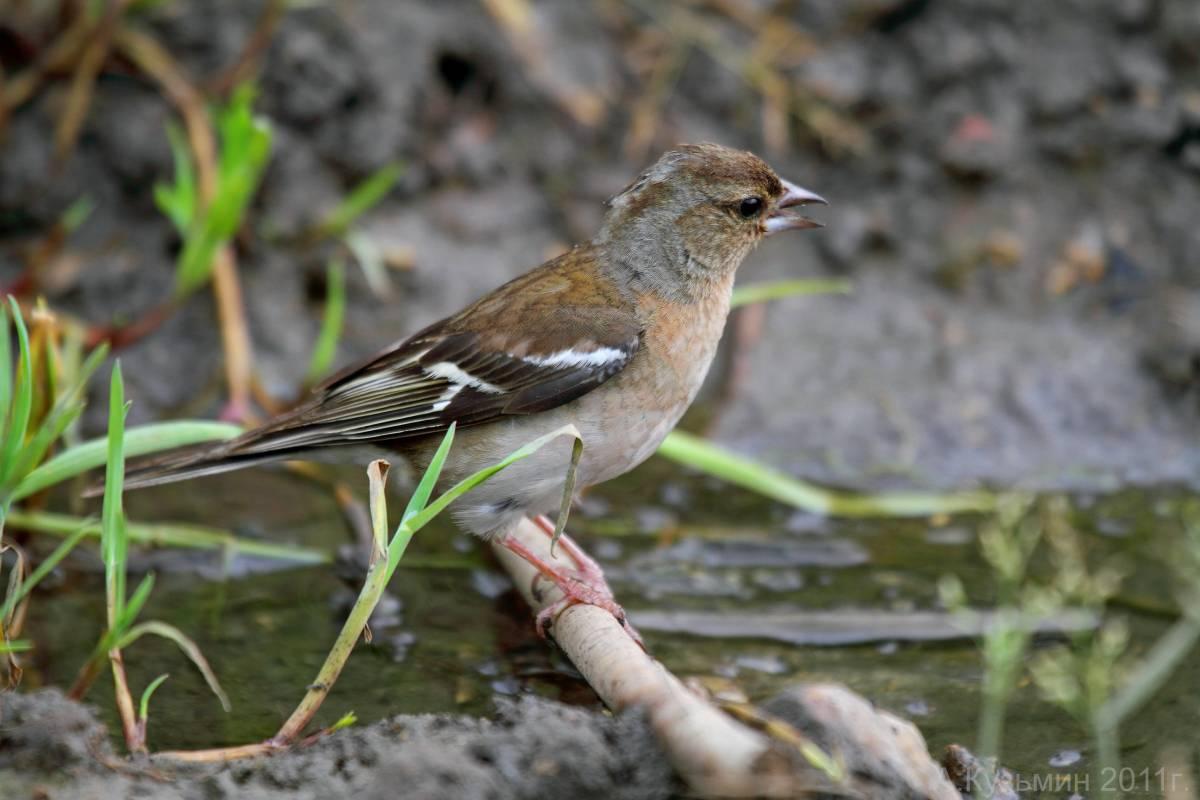 птицы фотографии и названия ростовской области много