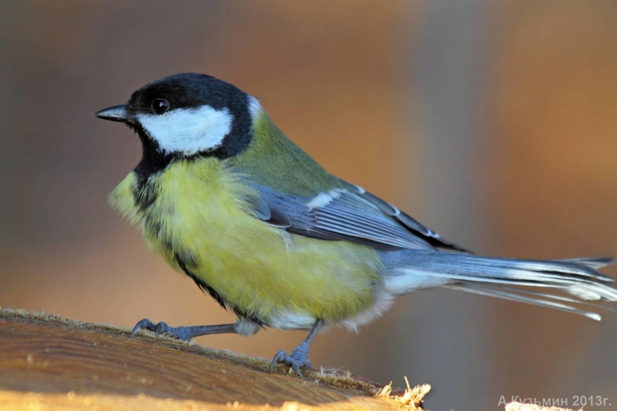 даже птицы фотографии и названия ростовской области настоящее время бардами
