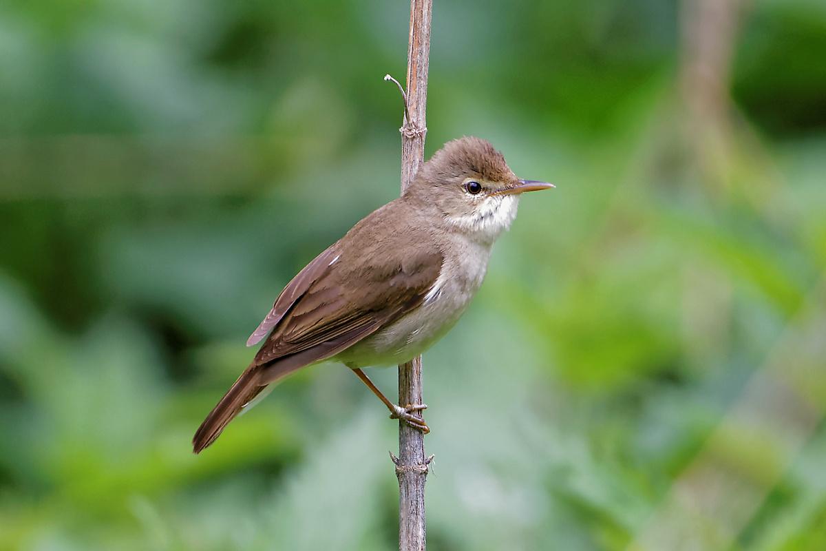 строится вокруг садовые птицы фото и названия для привлечения