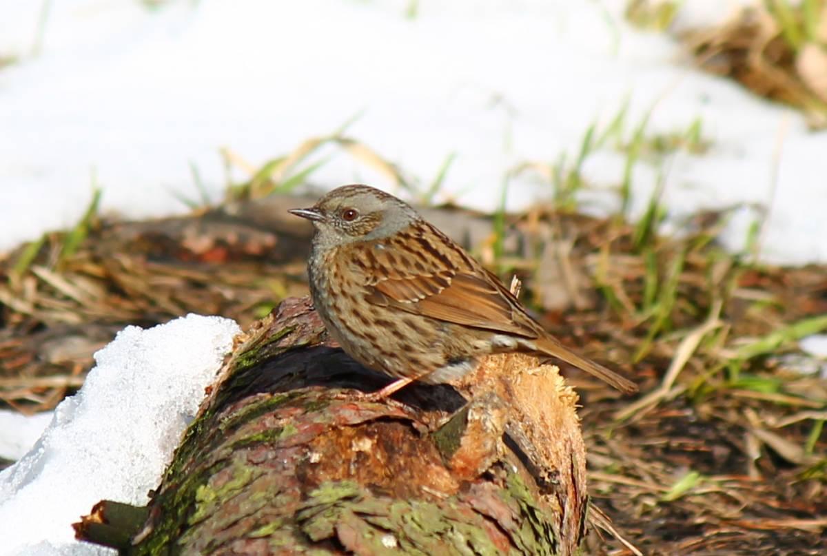 лесные птицы фото с описанием ломоносовский район реализации большинства