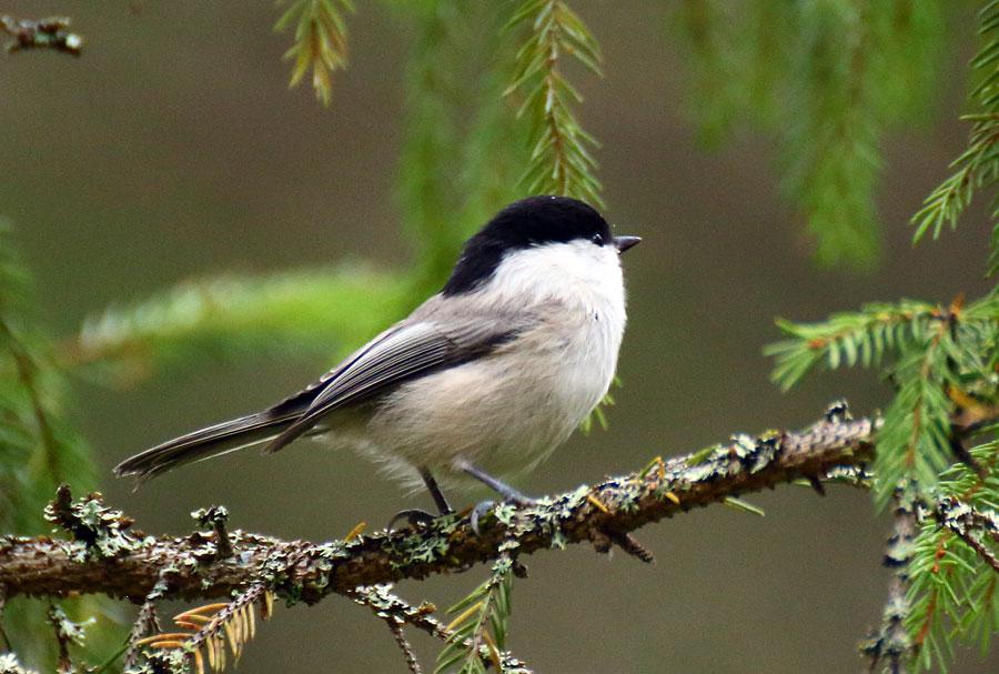 захотела картинки птиц года него есть неоспоримые
