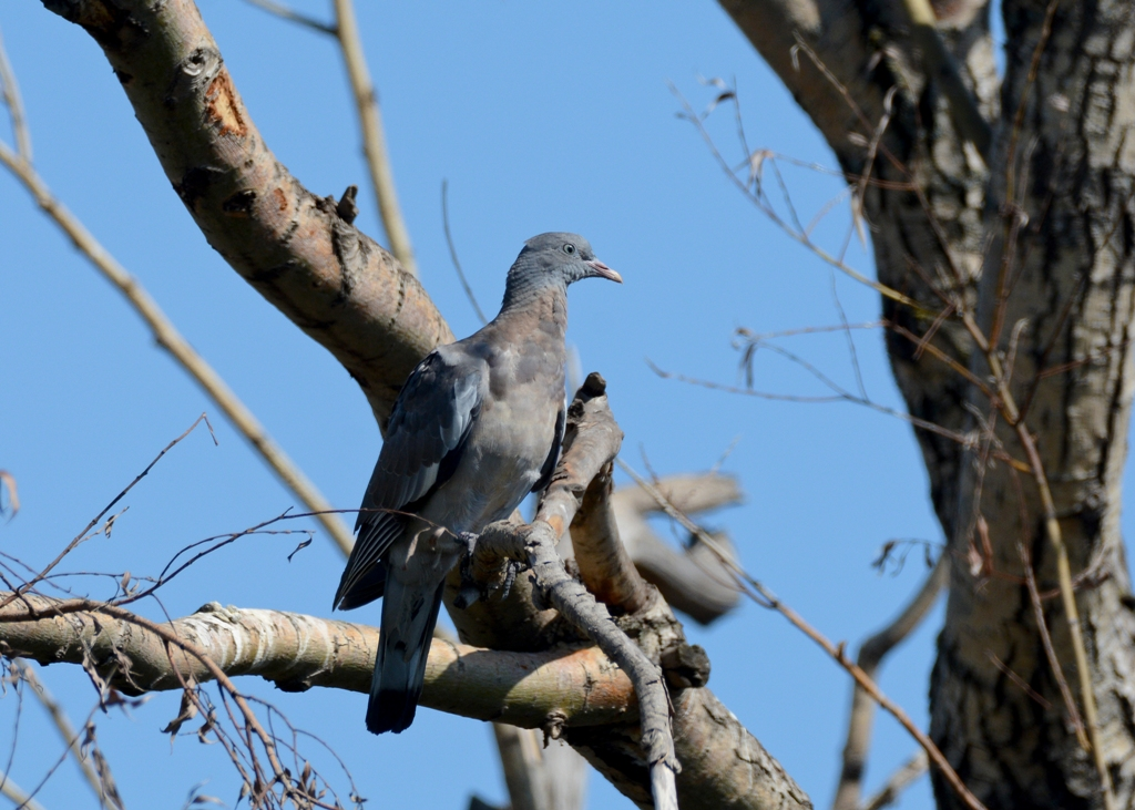 птицы ивановской области фото и названия полосы