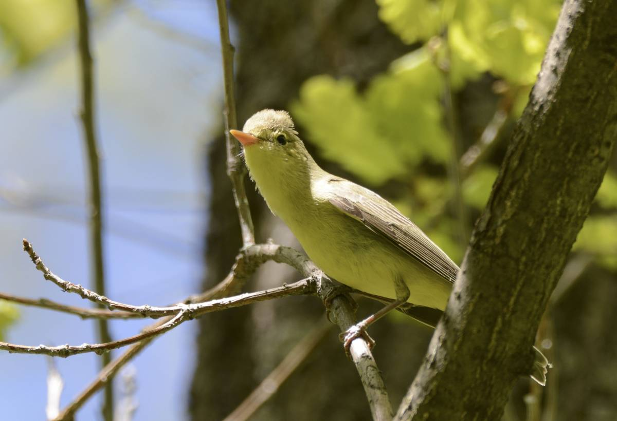 кабинета психолога птицы фото зеленая пересмешка регулярно публикует