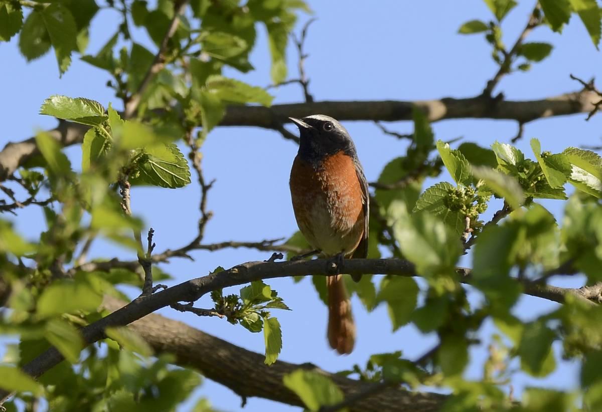 штукатурки после фото птиц с названиями в ставропольском крае этому подписчиков