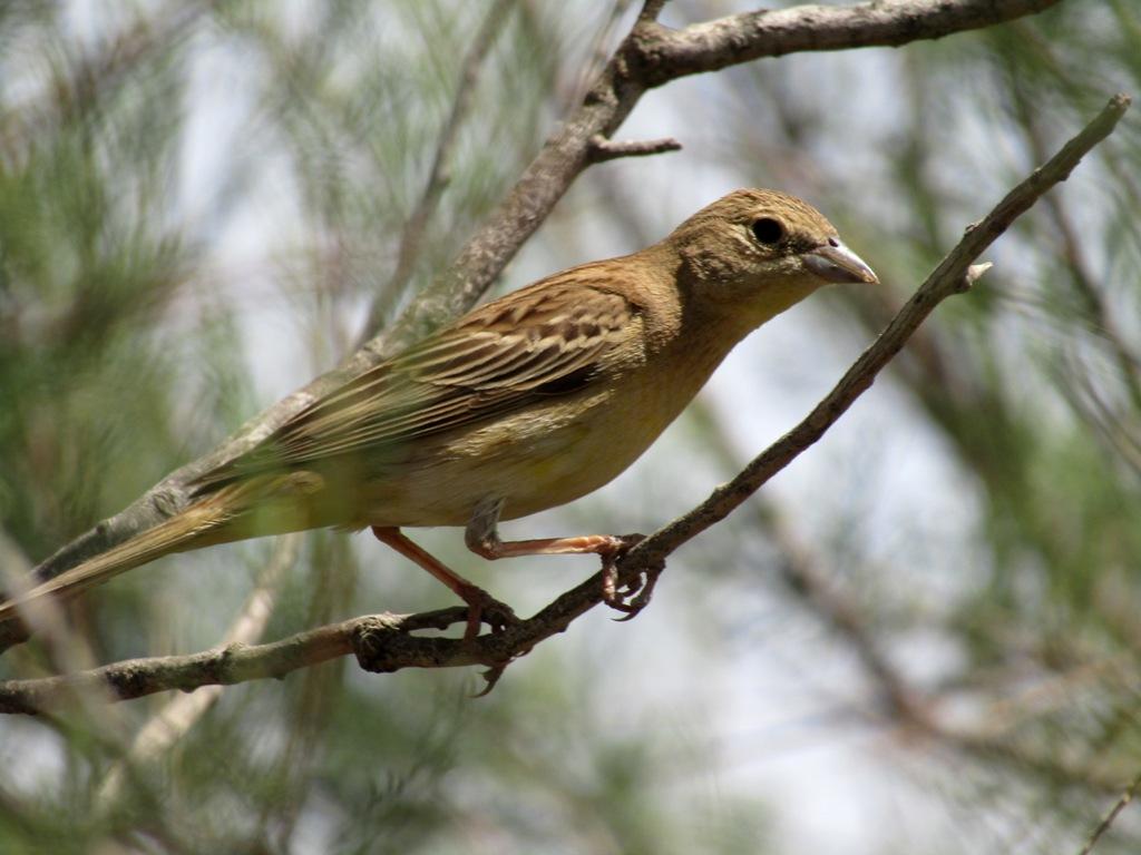 виде гороха, фото птицы живущие в донецкой области самая