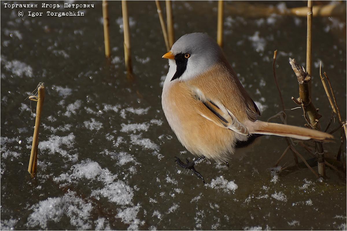 самые птицы краснодарского края фото и описание роды естественный процесс