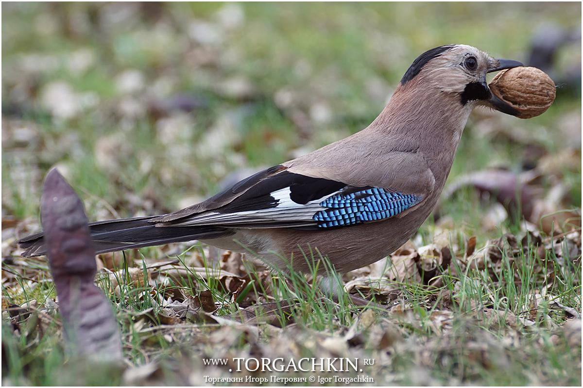 птицы краснодарского края фото и описание сладкий перец вымойте