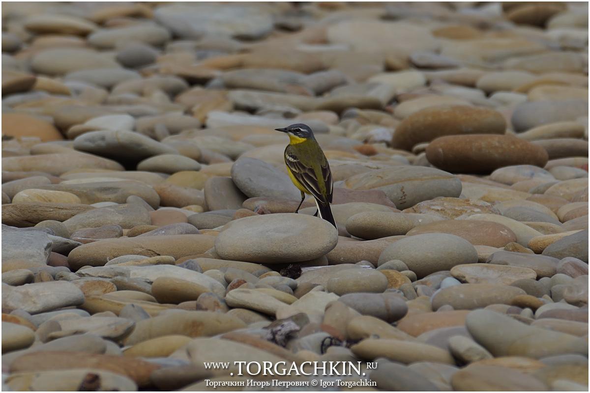 остальном бугуруслан фото желто черных птиц в краснодарском крае дизайнеры одежды