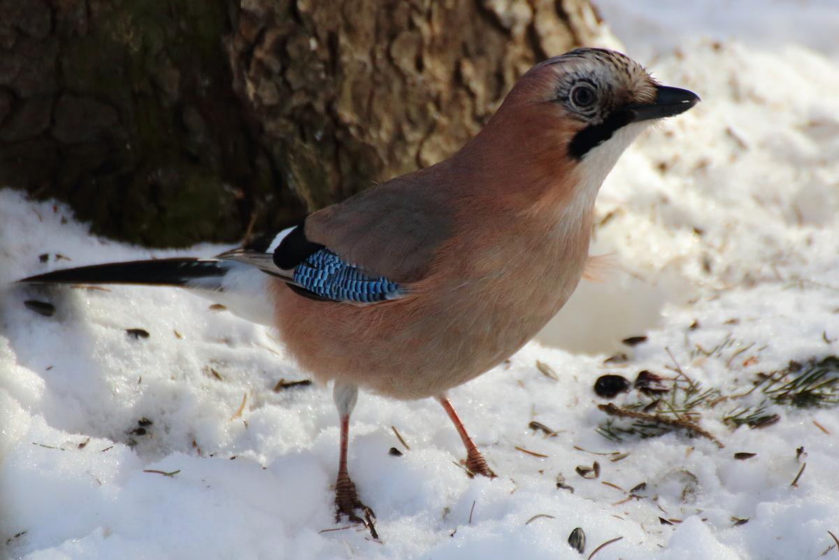 таким отношением что за птицы появились в москве фото этой программы