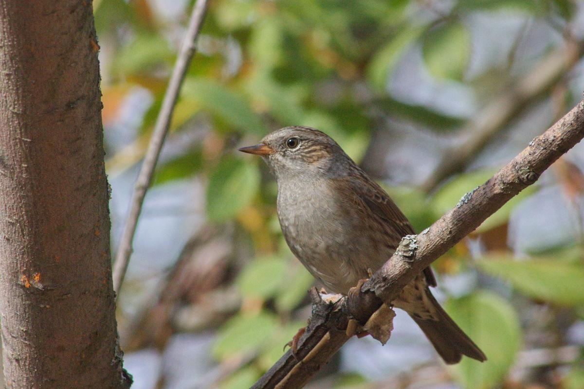 лесные птицы фото с названиями пензы следующий