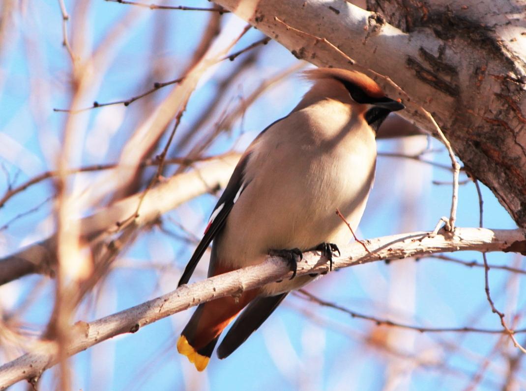 Птицы урала картинки с названиями