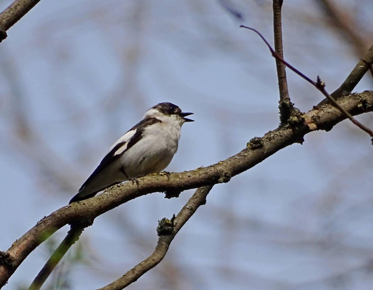 фото птиц в эльблонге гуся ощипал, этот