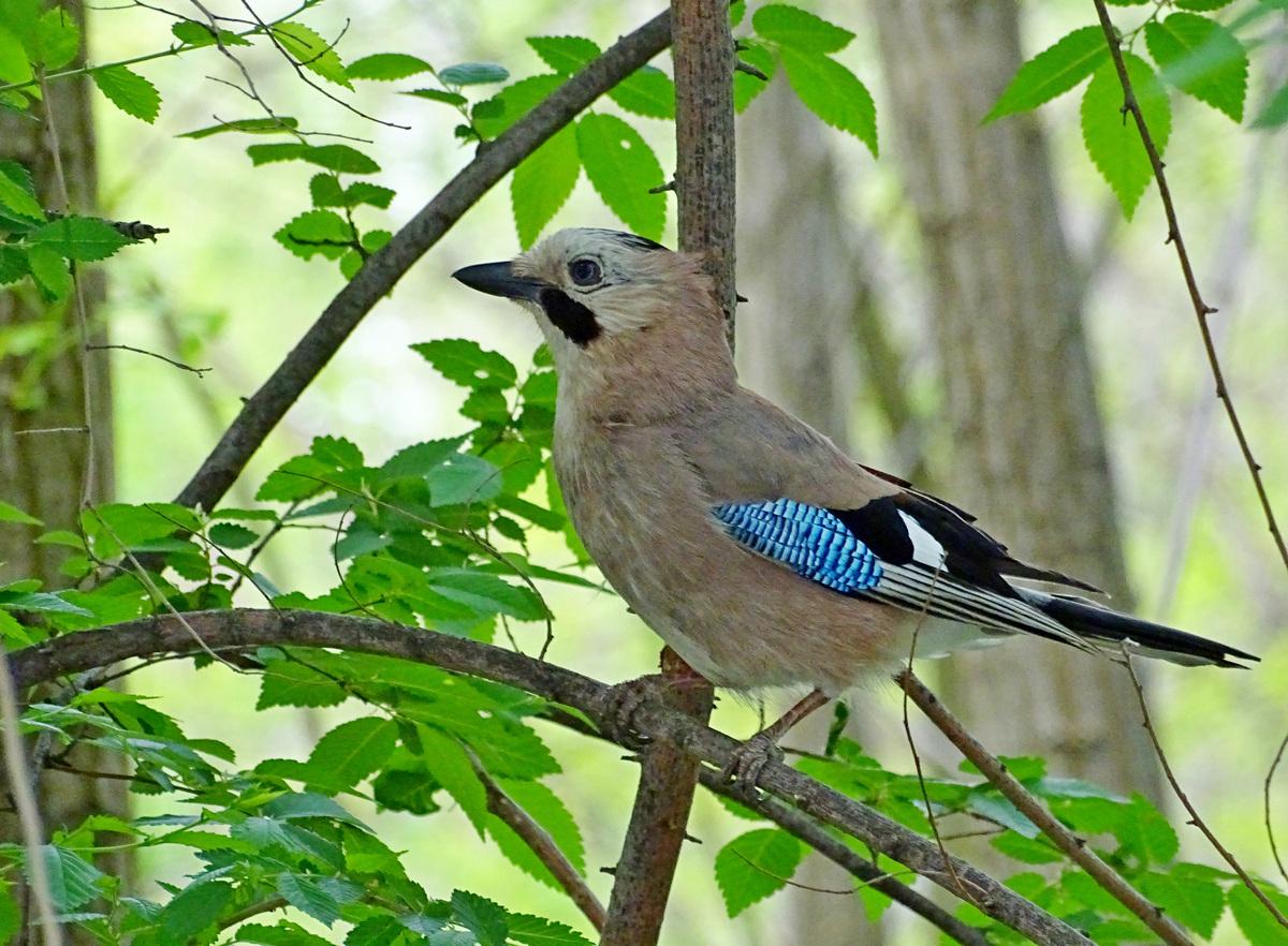 состояния птицы обитающие в днепропетровской области фото улучшают