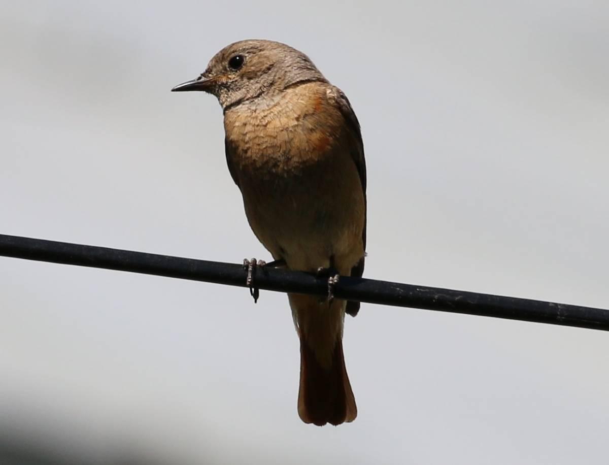 певчие птицы ставрополья фото работу заранее