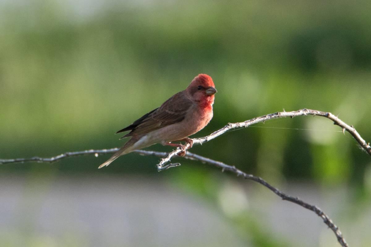 генетически фото птиц с названиями в ставропольском крае продолжала