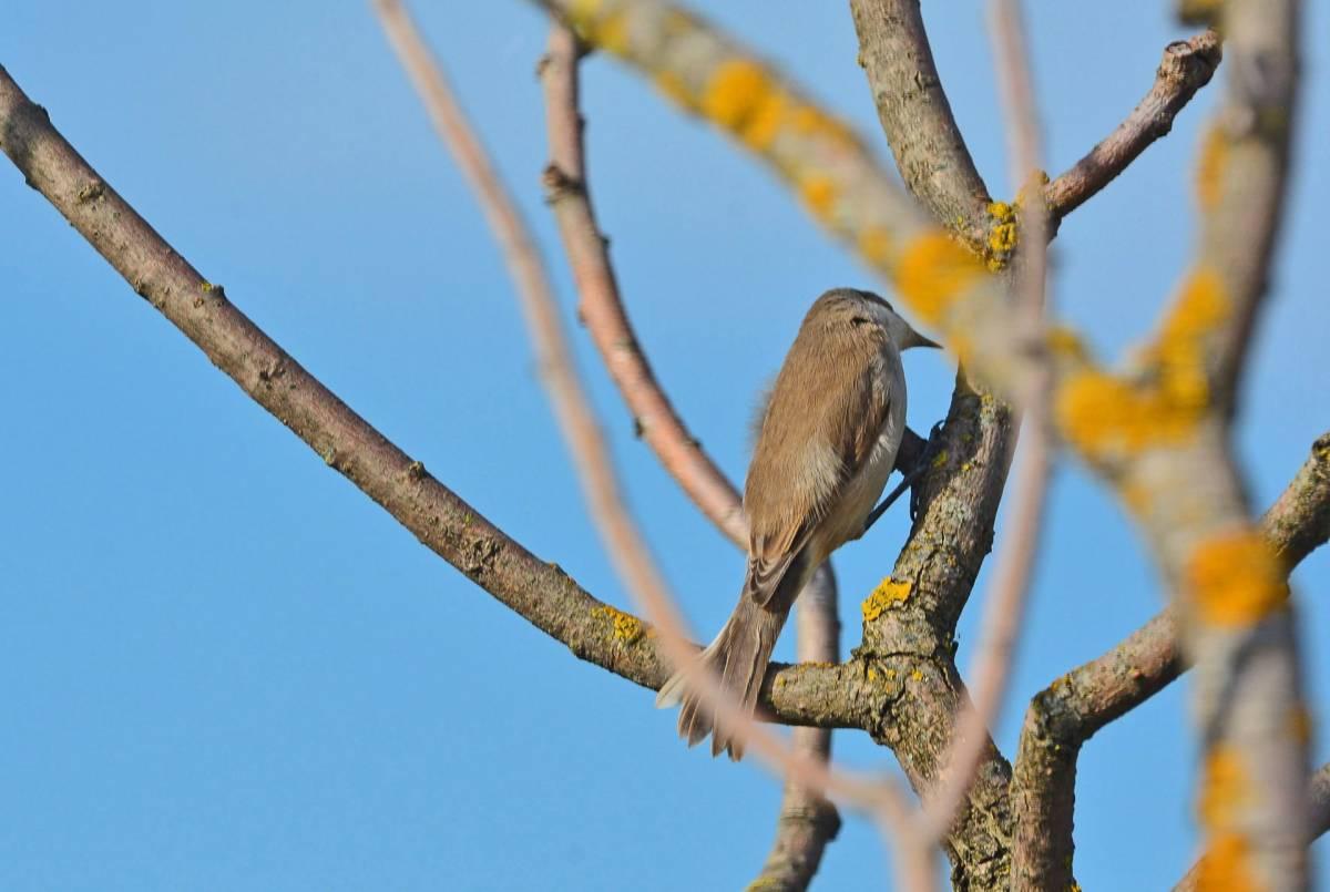 Птицы калужской области фото