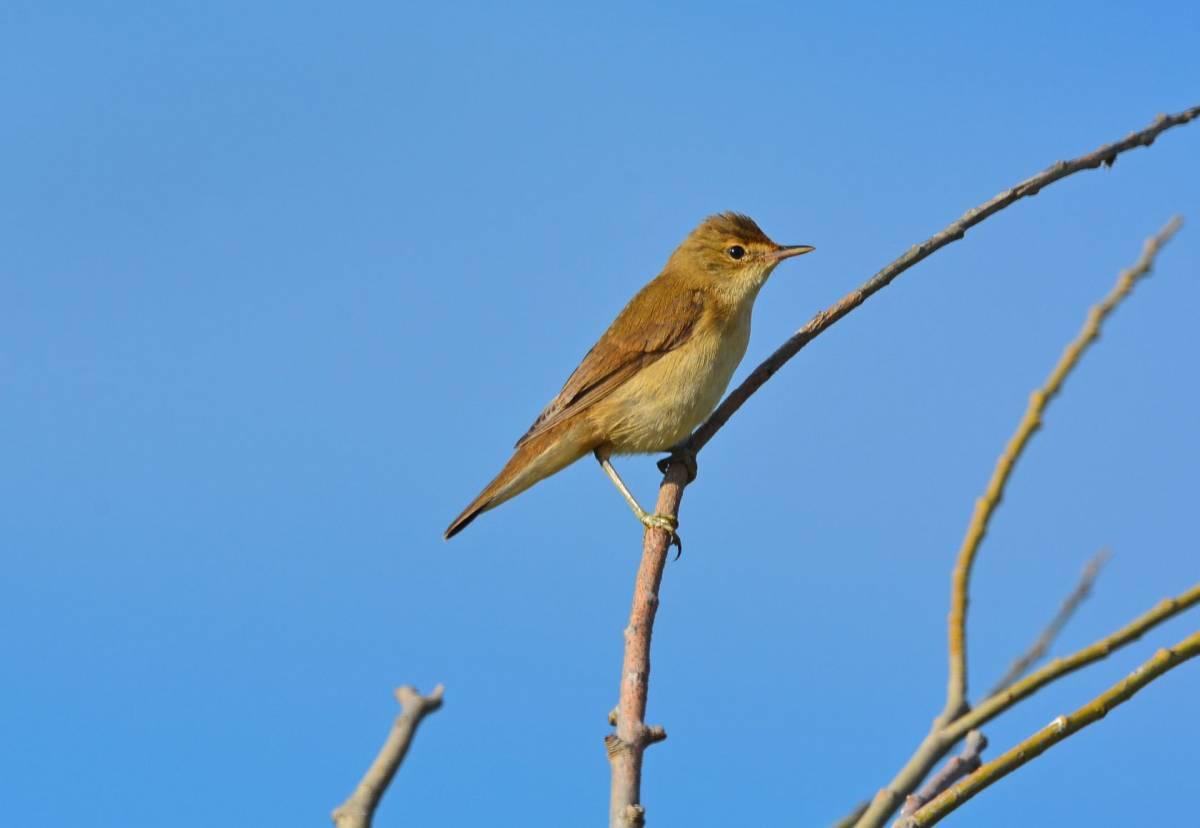птицы в калужской области
