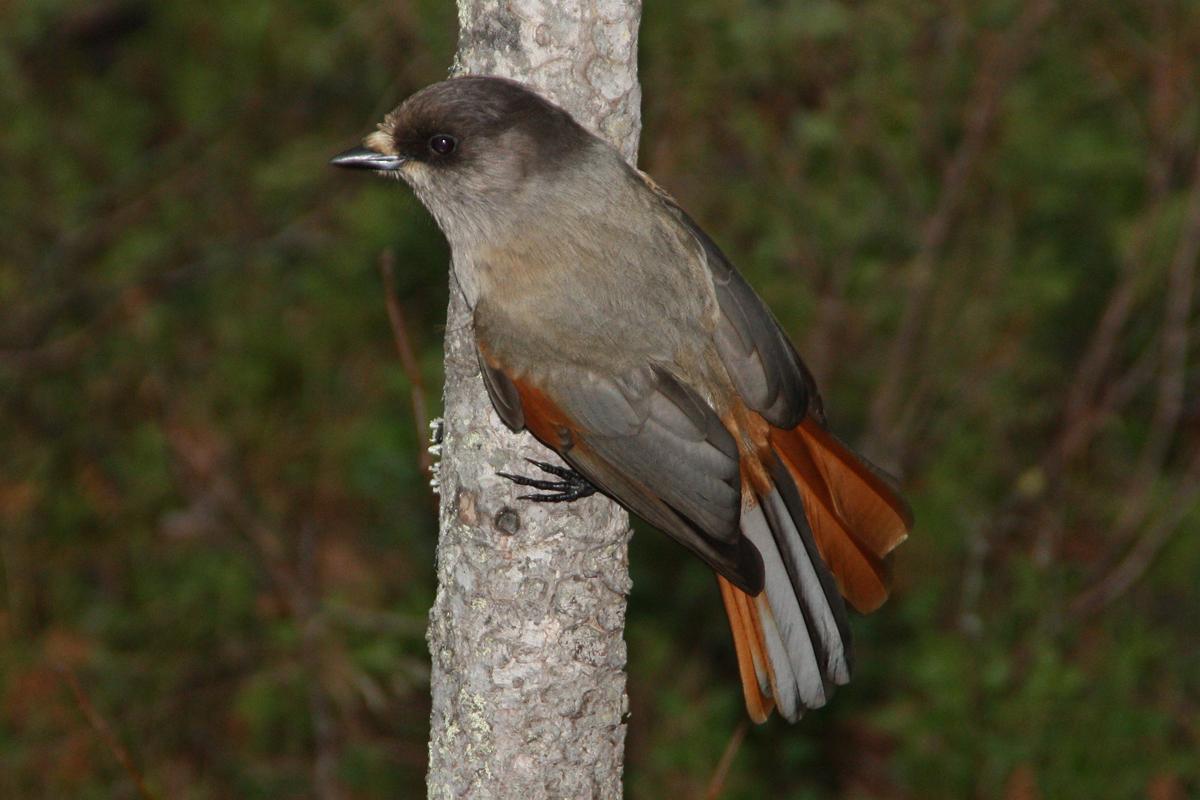 это названия птиц нижегор области с фото отдали